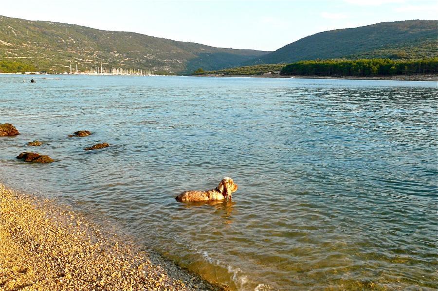 Baden mit Hund bei Cres