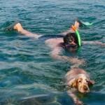 Schnorcheln mit Hund auf Krk