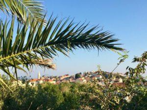Palmen in Mali Losinj