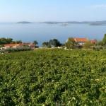 Weinregion Pelješac