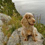 Mit Hund auf Dugi Otok