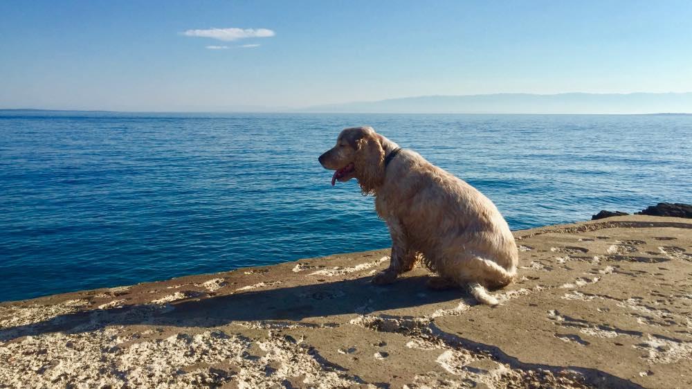 Von Mali Losinj nach Veli Losinj mit Hund